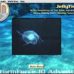 SubHuman Demo CD-ROM - Sea Life Screen (Copyright Michael Ryan and Mark Schultz)